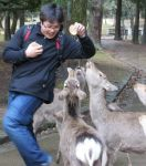 Nara deer Attack by BertLePhoto