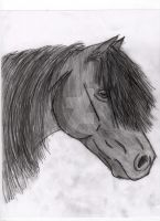 Equine Portrait by SodaHorse73