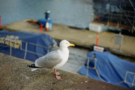 Grand Canal Dock: Seagull-Looking Fellow by neuroplasticcreative