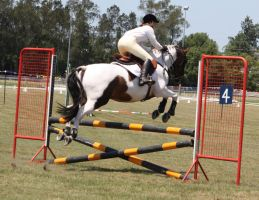 STOCK Showjumping 393 by aussiegal7