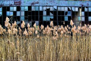 Abandoned Auto Parts Plant by basseca