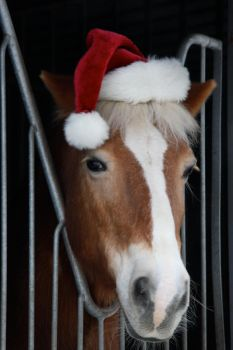 Christmas Horses by webworm