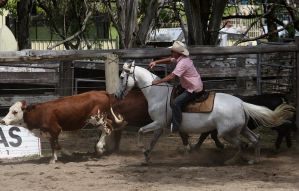 Stock - Horse Team Penning - 037 by aussiegal7