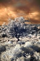 Infrared Tree by drr104