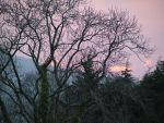 Tree and Sky by ttwm-stock