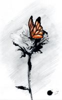 The butterfly is gone by Augusto-Rubio