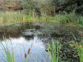 Pond In Late Summer by Lost-in-the-day