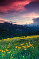 Alpine Sunflower Meadows by kkart