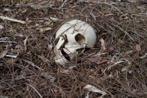 Human Skull 002 - HB593200 by hb593200