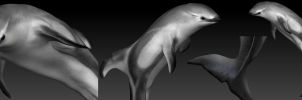 zBrush Dolphin by SunStateGalleries