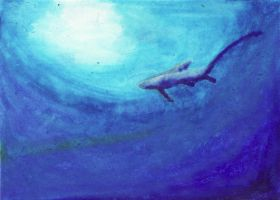 Thresher Shark ATC by applescruff