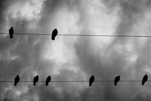 Birds on a Wire by CHabio