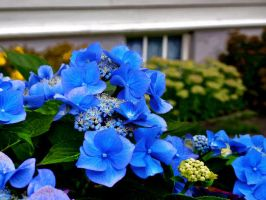 Blue Flower Photograph by boringzoo