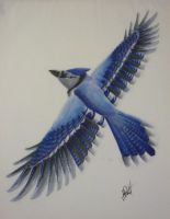 Bluest Blue Jay by RyutehRyu