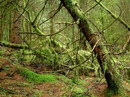 Old Forest by scotto