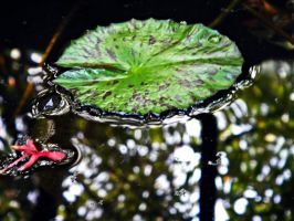 Waterlily by alkimh