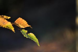 Autumn Impressions VI - leaves hanging around by Krash-Team