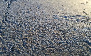 Frozen lake writting by wittlecabbage