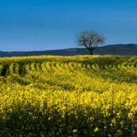 Spring Feel by OlivierAccart