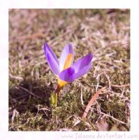 first sign of spring by Julanna