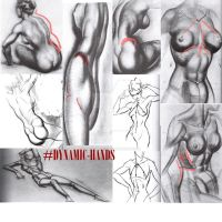 Lesson 4: Female Anatomy by Blue13Brush7
