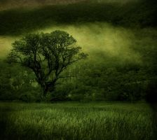 Mist green.. by hearthy