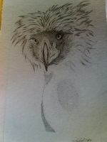 Pointillism Philippine Eagle by colourloverMarj