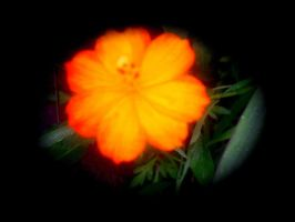 orange flower by KenshinKyo