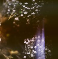 forest IV by vitzy