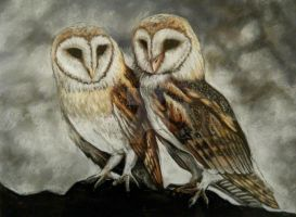 Pastel Barn Owls Drawing by lalabellexx