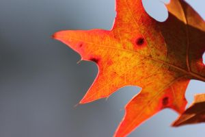 Leaves 5 by Tamamantix