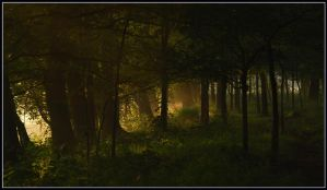 When the forest wakes up by jchanders