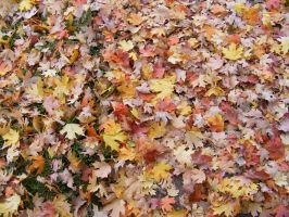 Autumn Leaves 01 by DKD-Stock
