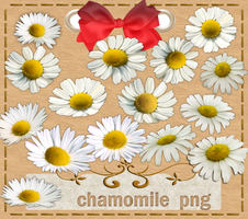 Chamomile by roula33