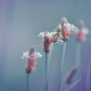Flower in Chaos IV by makowina