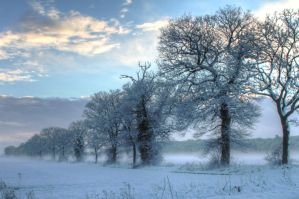 Snow and mist by AngelsOdyssey