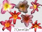 7 Clearcut Lilies by idperson