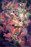 Autumn plant by AndrielTaro