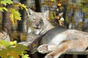 Lazy Fall Day by cindy1701d