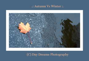 .:Autumn VS Winter:. by DayDreamsPhotography