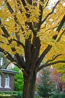 Autumn Color 0037 10-16-14 by eyepilot13