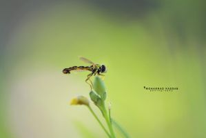 Just small and beauty by MohannadQassab