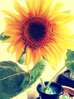 Sun Flower by Thereysa