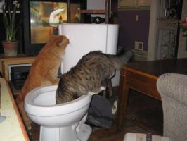 The cats and the toilet 2 by lina5494