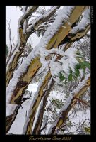 First Snow 2006 by eehan