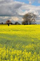 Rape field by ukwreckdiver