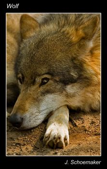 Wolf. by Jna1985