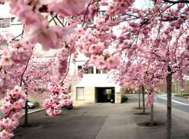 Pink Alley by inacom
