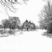 Snowlands  II by lostknightkg