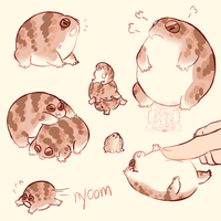 desert rain frogs are best froggos by dongoverlord
